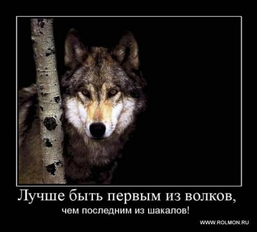 Про волков и волк демотиватор